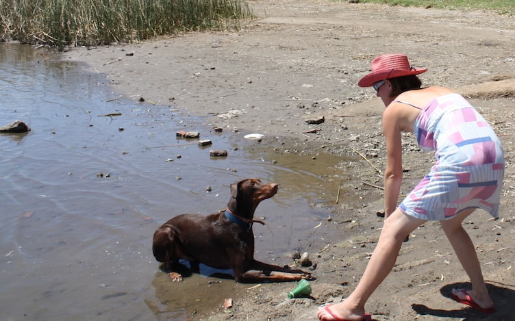 photo of my dog Mino cooling down in the water with me about to throw a stick