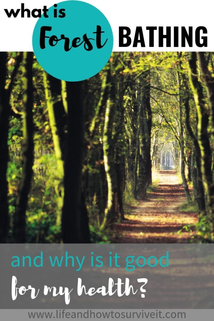 what is forest bathing and why is it good for my health?