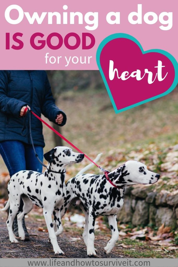 Owning a dog is good for your heart