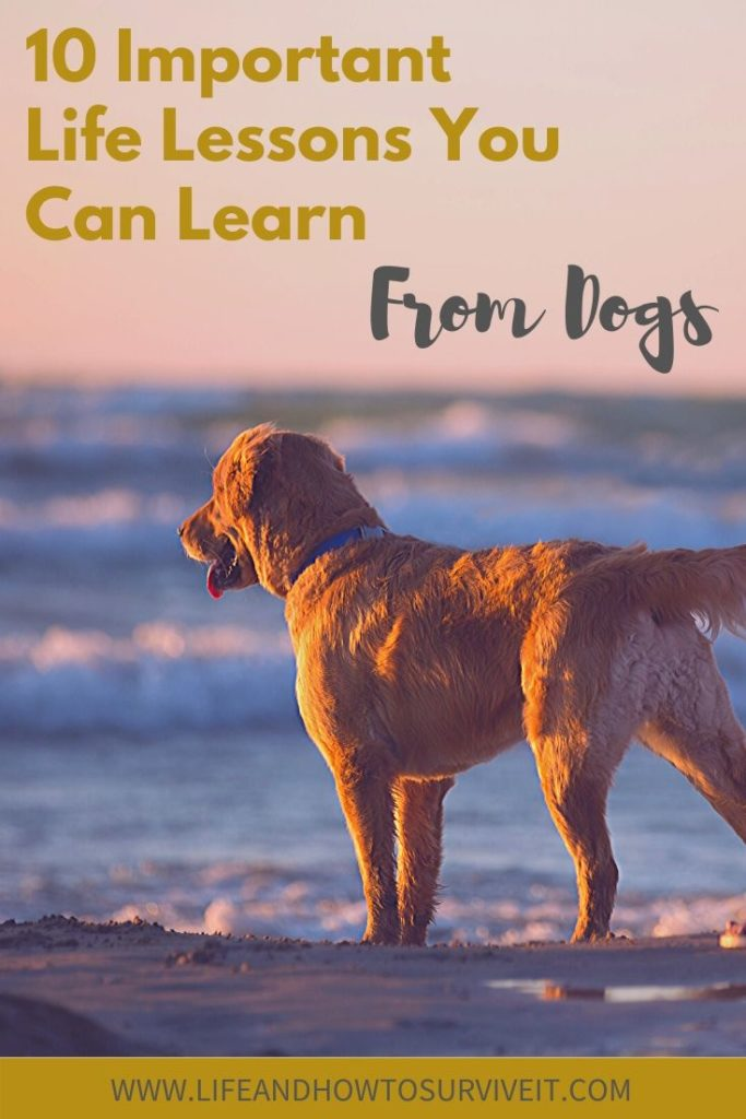 Important life lessons you can learn from dogs