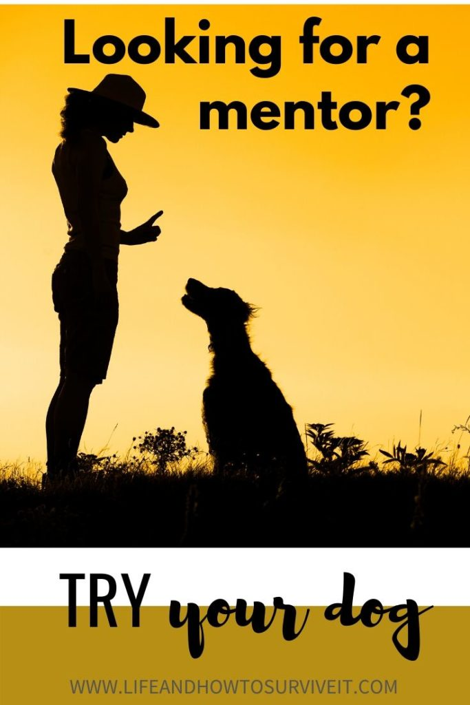 Looking for a mentor? Try your dog