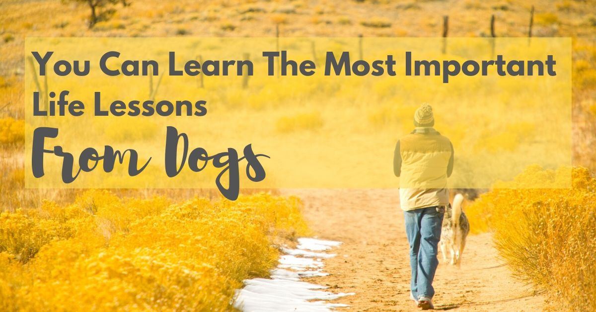 We can learn the most important lessons from dogs