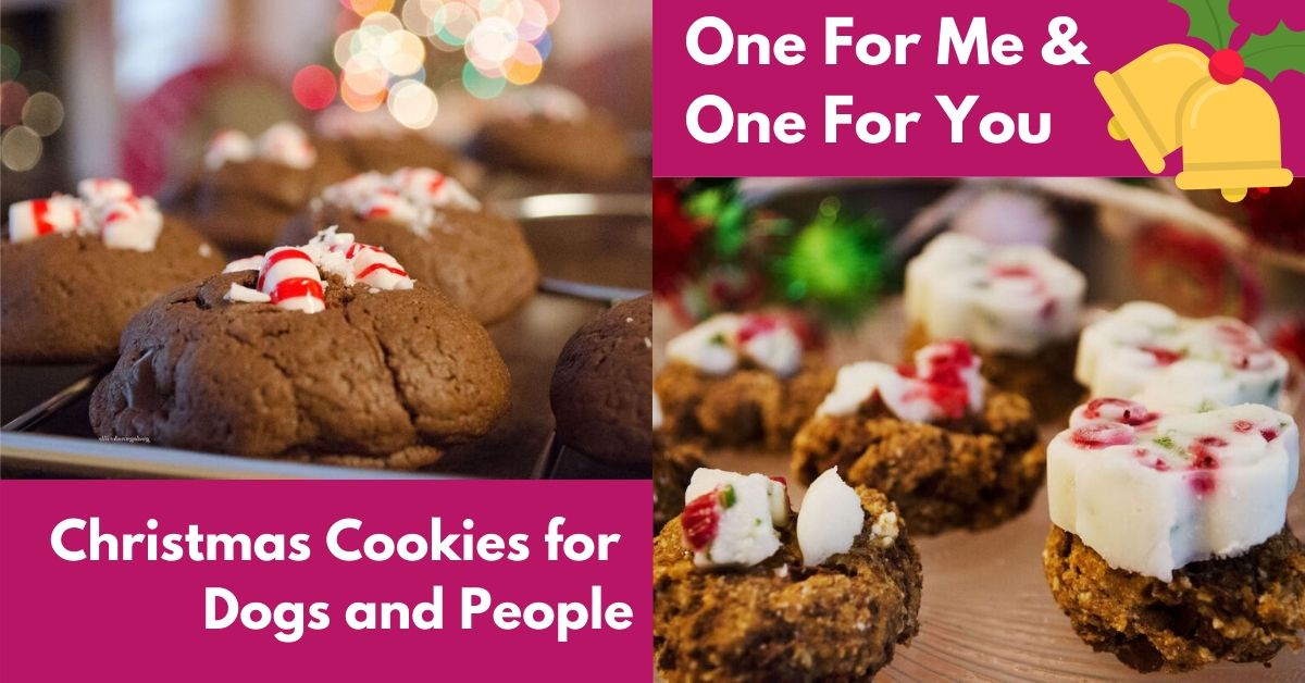 One For Me & One For You: Christmas Cookies for Dogs and People