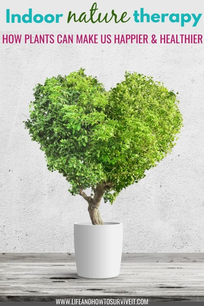 How indoor plants can make you happier and healthier