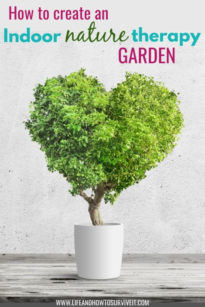 Create an indoor nature therapy garden