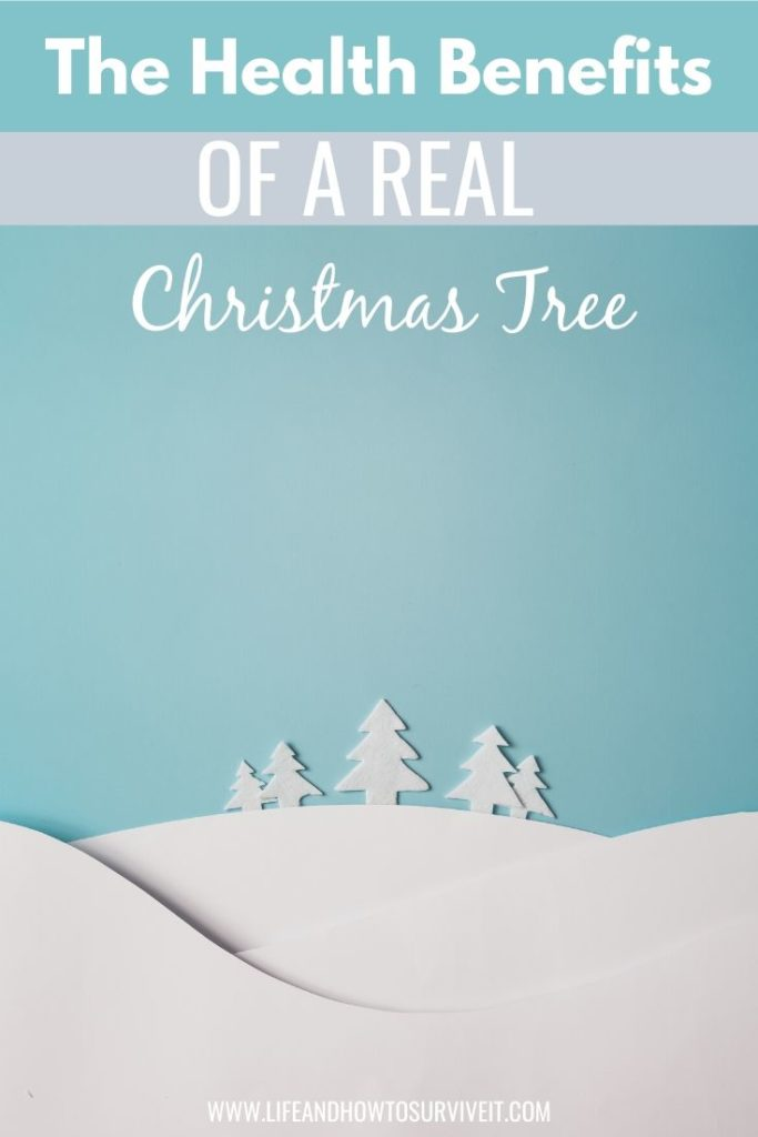 The health benefits of a real Christmas tree