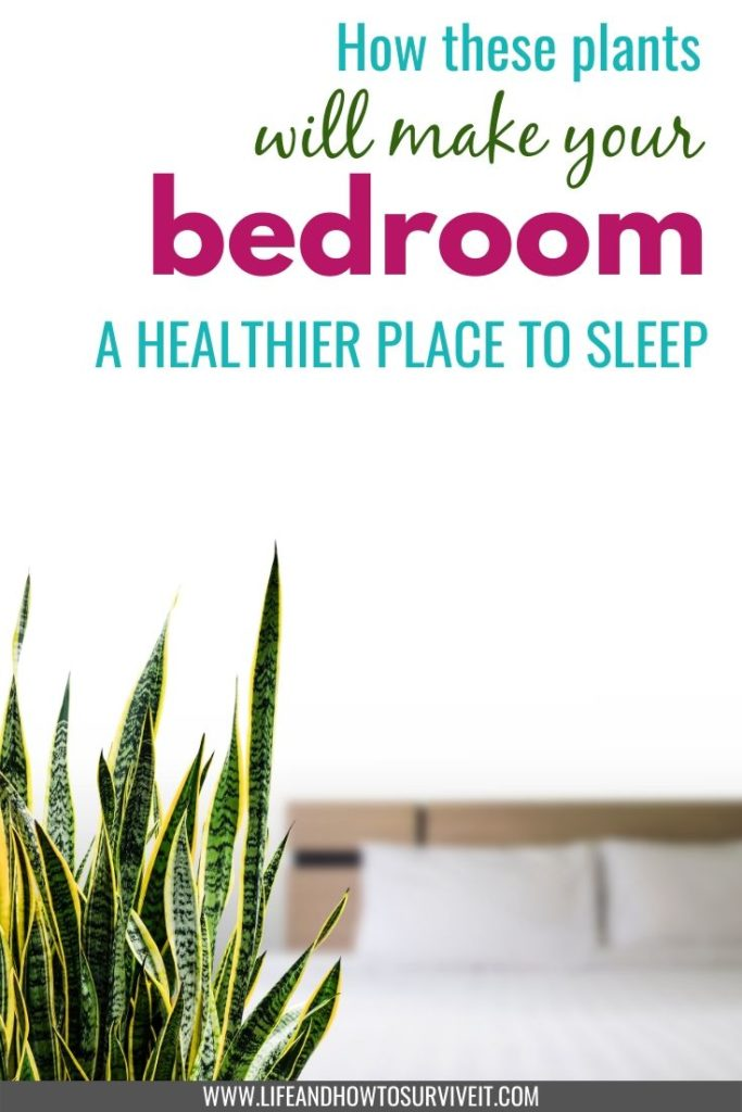 How indoor plants can make you happier and healthier: these plants make your bedroom a healthier place to sleep