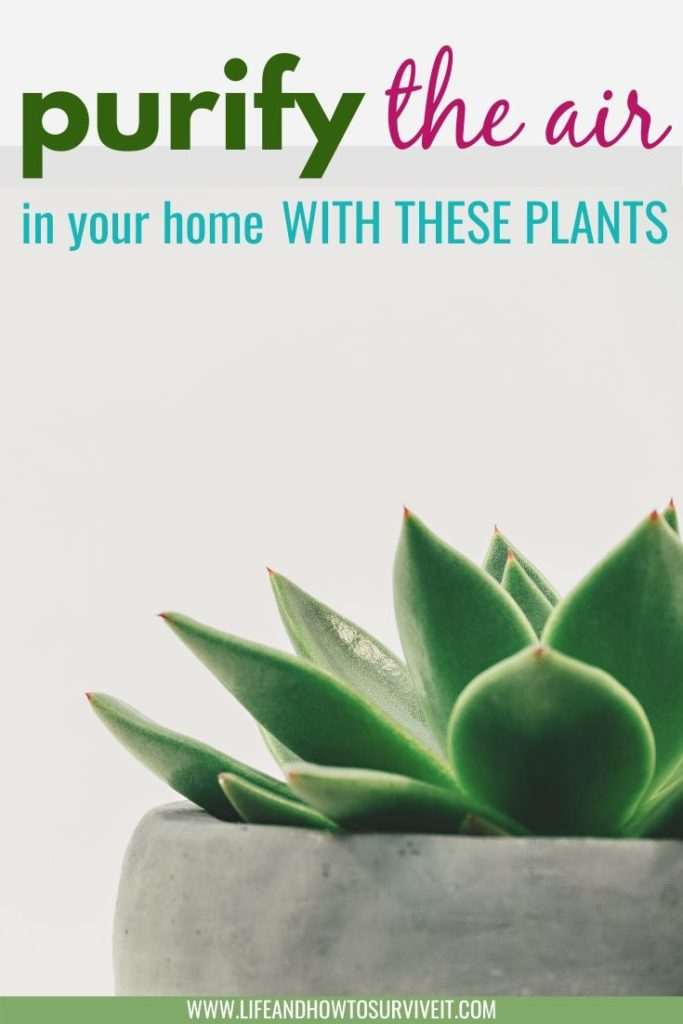How indoor plants can make you happier and happier: these plants purify the air in your home