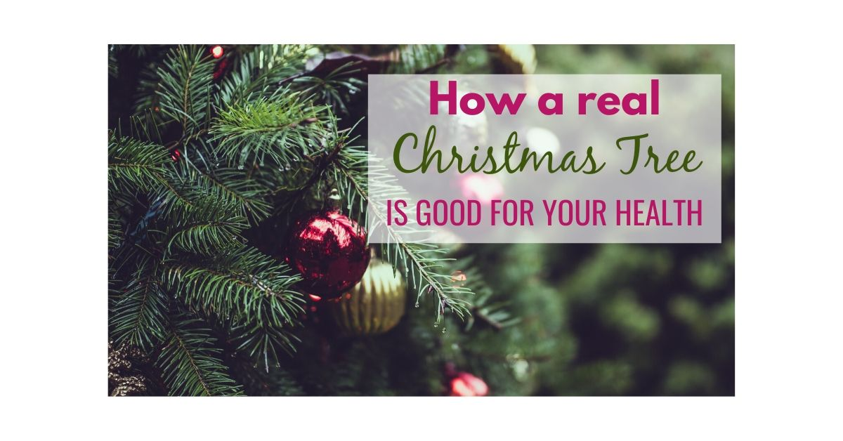 How a real Christmas tree is good for your health