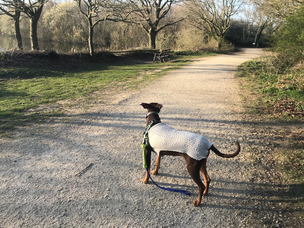 image of dog at a nature reserve