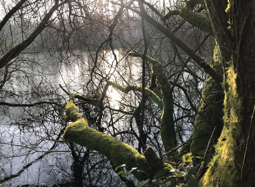 image of trees and water